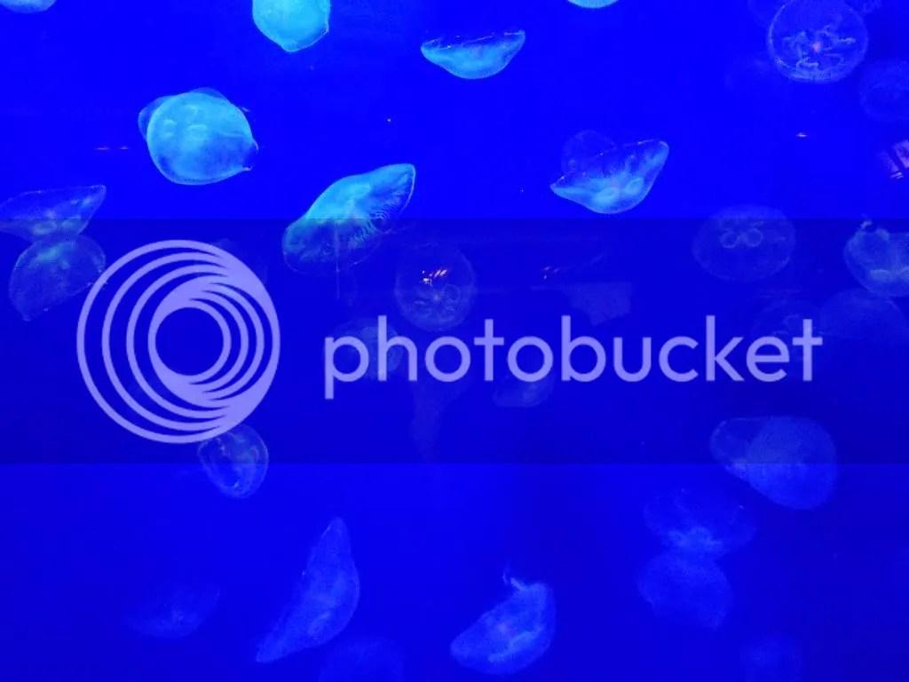 photo DSCN1074_zps7c59483e.jpg