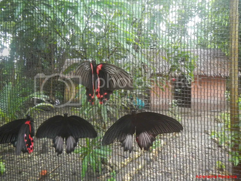 Tibiao Butterfly Farm