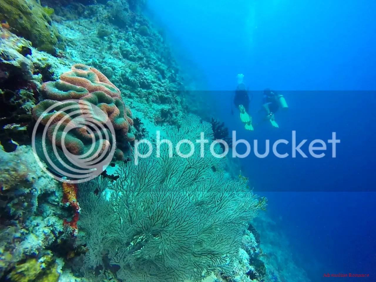 Black Forest Balicasag Island