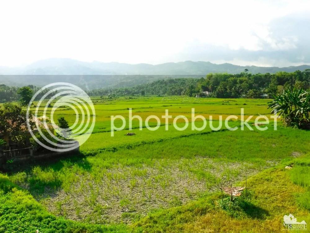 Jagna rice farm
