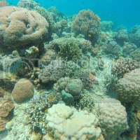 Project BLUE: A Worthy Endeavor to Save Sumilon Island's Majestic Corals