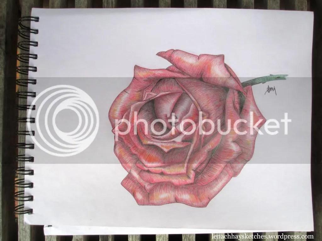 Red Rose 10-12-14 photo RedRose10-12-12_zpsef9e1661.jpg