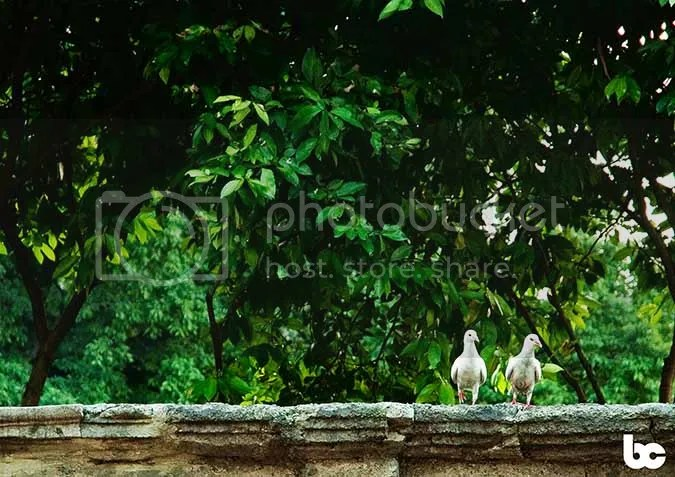 photo 201201_prenup_tinaedison_cam2_0489_2_zps8b0e499b.jpg