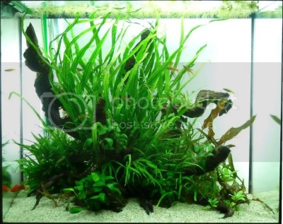 Daize's 120L island aquascape   UK Aquatic Plant Society