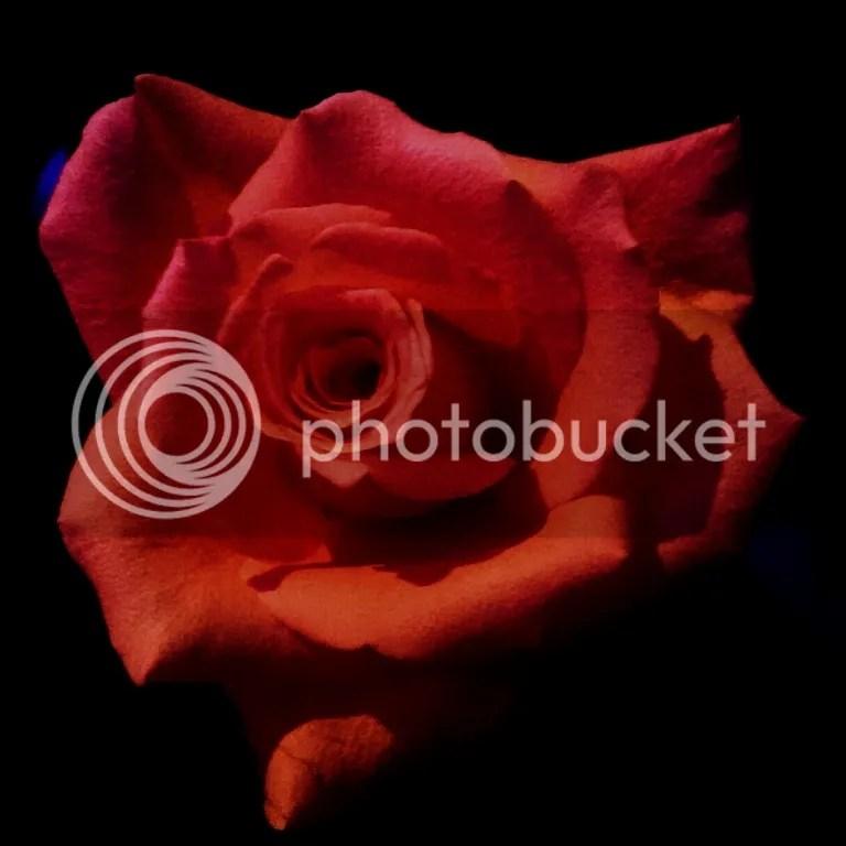 photo eyeemfiltered1416058034390_zpsfc24c646.jpg