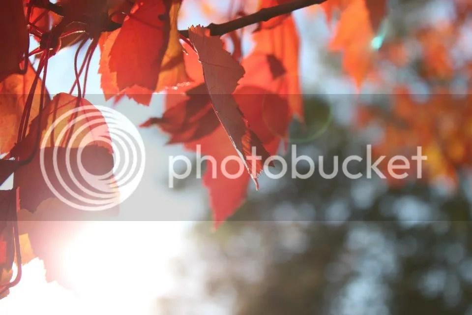 photo fallusa02_zps8635c372.jpg