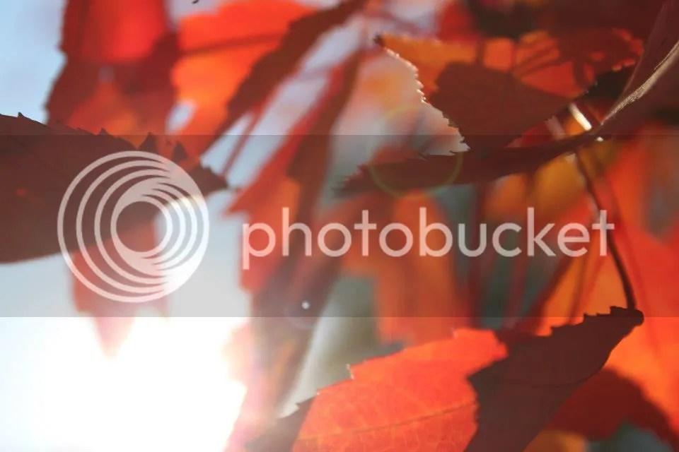 photo fallusa05_zps92fac912.jpg