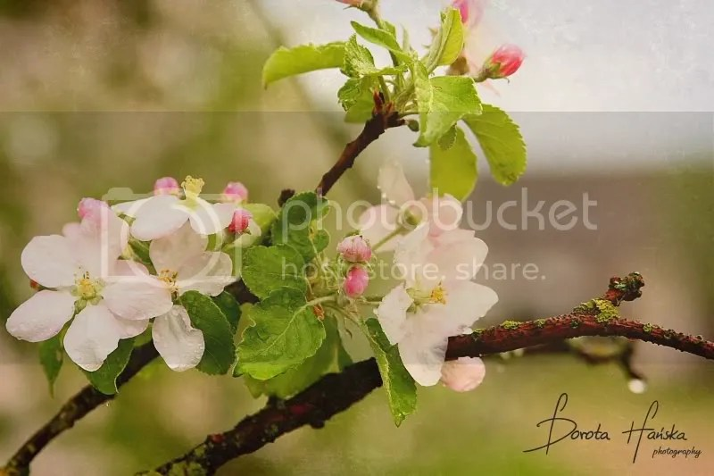wiosna, przyroda, kwiaty, zdjęcia kwiatów
