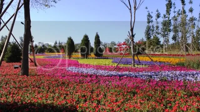 Field of Annuals