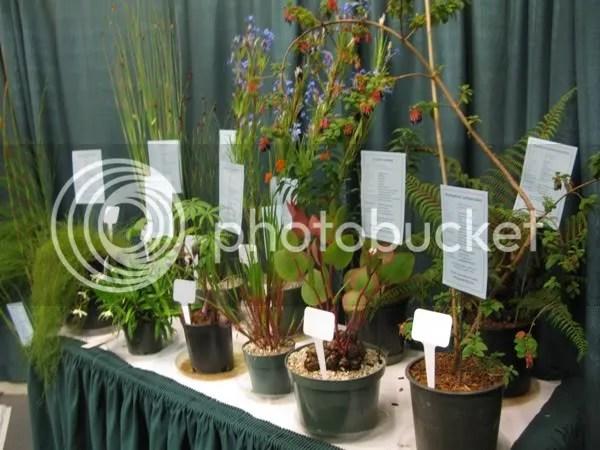 Martin's Rare Plants