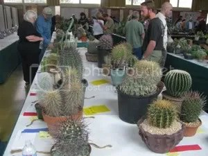 crowd at show tables