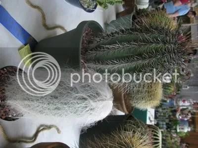 Show Plant I
