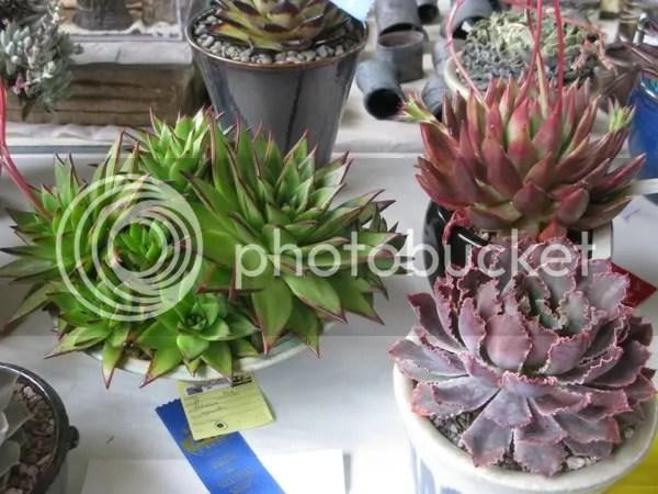 Show Plants 1