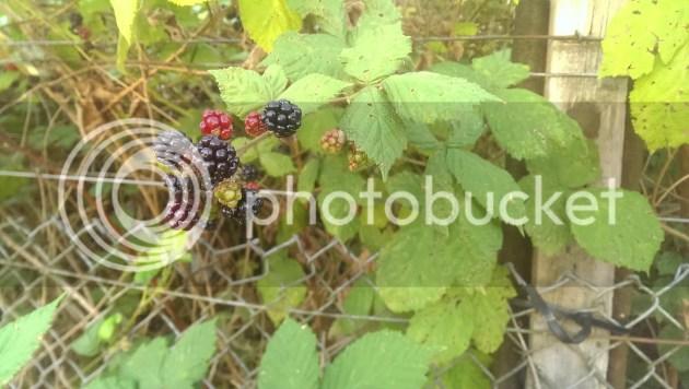 photo 2014-08-21083403_zps5a2e9b2d.jpg