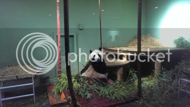 photo Panda2_zpscb114121.jpg