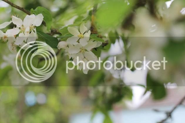 photo 2016-05-20 14.49.05_zpsbkgsfsqr.jpg