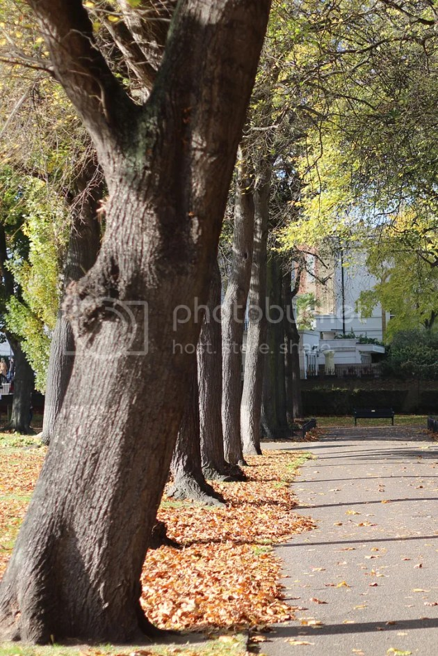 photo Autumn Walks 16 v1_zpshfcf97tf.jpg