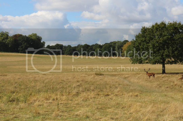 photo Richmond Park October 2016 12_zpsvvf5zdmb.jpg