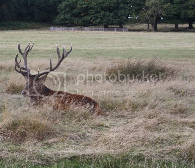 photo Richmond Park October 2016 24_zpsyiz0ecfp.jpg