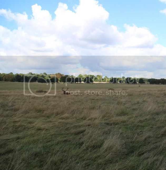 photo Richmond Park October 2016 30_zpsljgmpaig.jpg