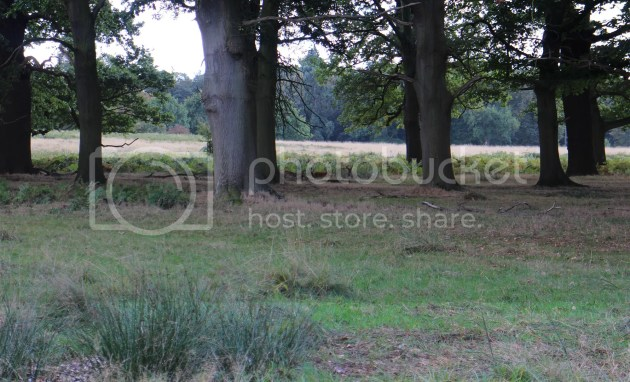 photo Richmond Park October 2016 33_zpsfeqpbtz5.jpg