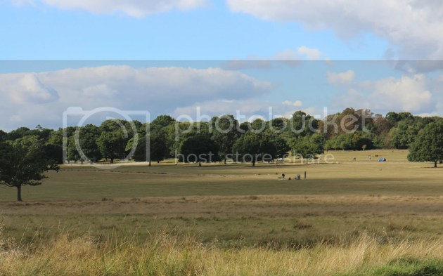 photo Richmond Park October 2016 40_zpshbhcw1tw.jpg