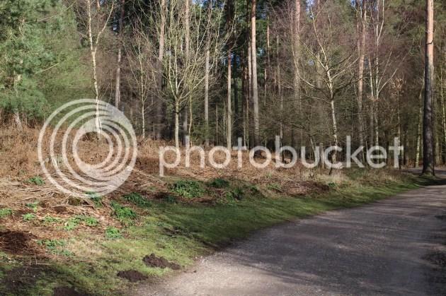 photo Valentines Weekend in Staffordshire 12_zpsroewki4i.jpg