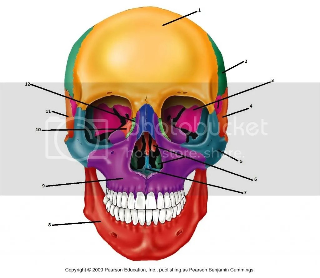 Bones Of The Anterior Skull Quiz