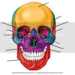 Facial Bones Diagram Not Labeled Trailer Wiring 7 Pin Flat 2014 Of The Anterior Skull Quiz By Kellyharrison