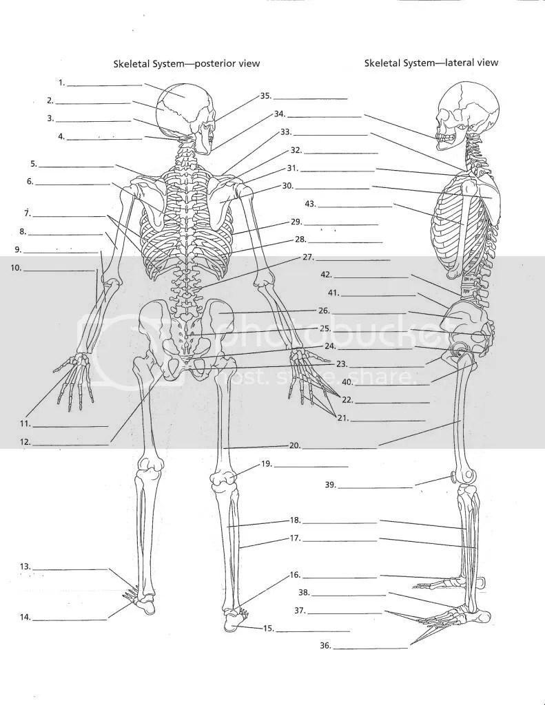 Overall Skeletal System- Posterior & Lateral View pg 9