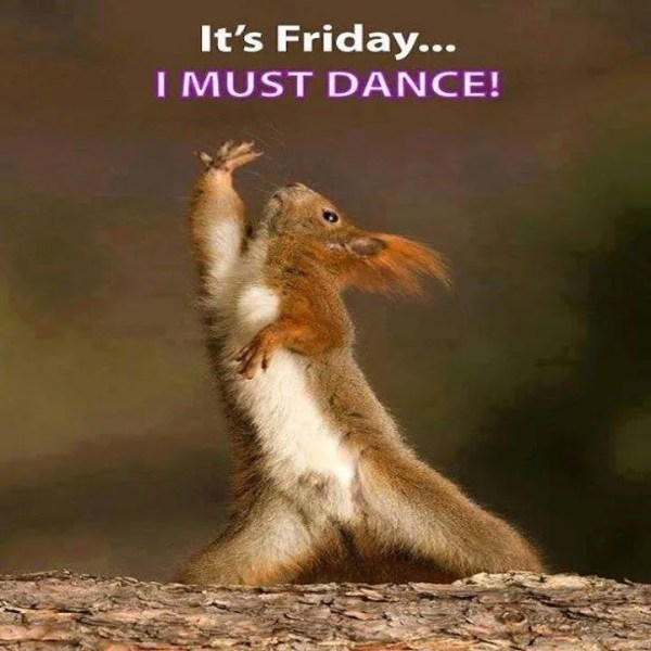 Happy Friday Here39s a cute squirrel MoneySavingExpert