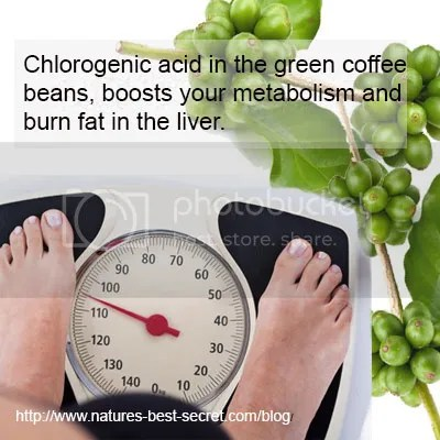 green coffee fat burn diet