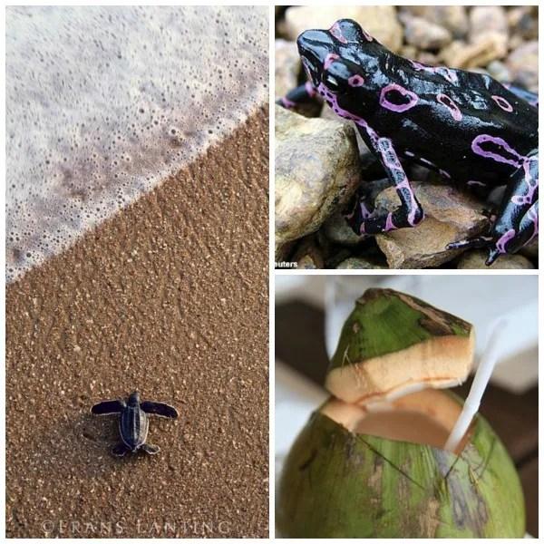 Sruiname photo Surinamenature_zpsdb69f8ab.jpg