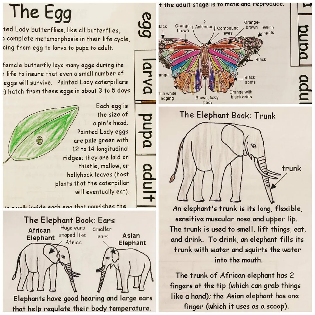 Homeschooling Rocks Enchanted Learning Science Printables Online Resource