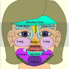 What Causes Acne Diagram 7 Pin Trailer Wiring Dodge Face Mapping Your Body Is Telling You Diet Holistic The Forehead Intestine Toxic Cascara Sagrada And Psyllium