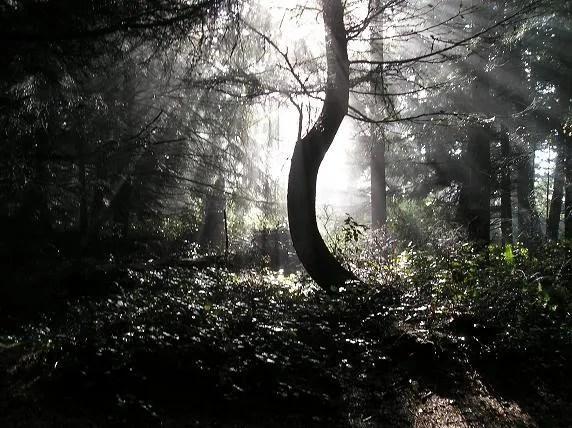 s tree
