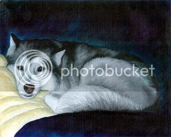 husky laying