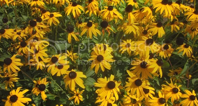 photo flowers_zps549fcad5.jpg