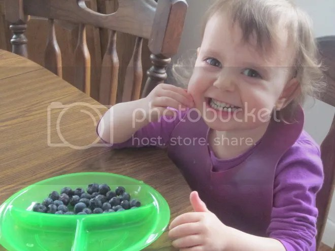 photo blueberries1_zpsc858a22c.jpg