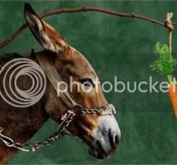 photo donkey-and-carrot_zps5bv24wum.jpg