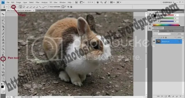 Belajar Photoshop Seleksi Dengan Menggunakan Pen Tool