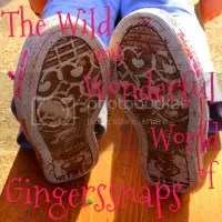 The Wild and Wonderful World of Gingerssnaps