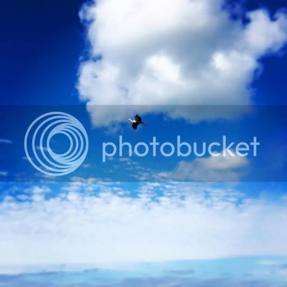 photo 12742270_1686190344926424_5479589614227055118_n_zpsglyo6vnj.jpg