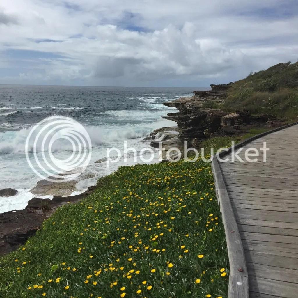 photo 9 Curl Curl Beach South_zps3qs0c6g9.jpg