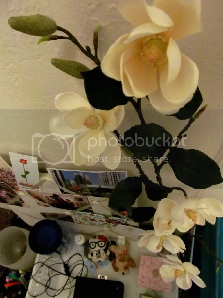 photo IMG_0943_zpsa2510fe2.jpg