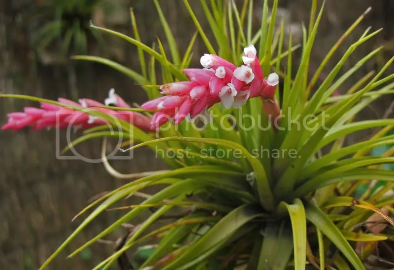 nice living room rugs wall decorations for rooms trio of tillandsia in flower