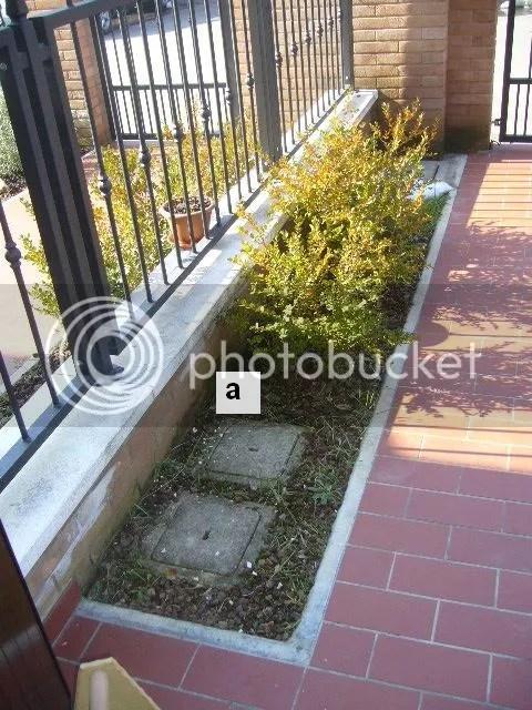 Un piccolo giardino triangolare  Forum Giardinaggio