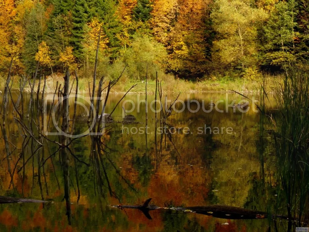 Photo P2490203_mod.jpg