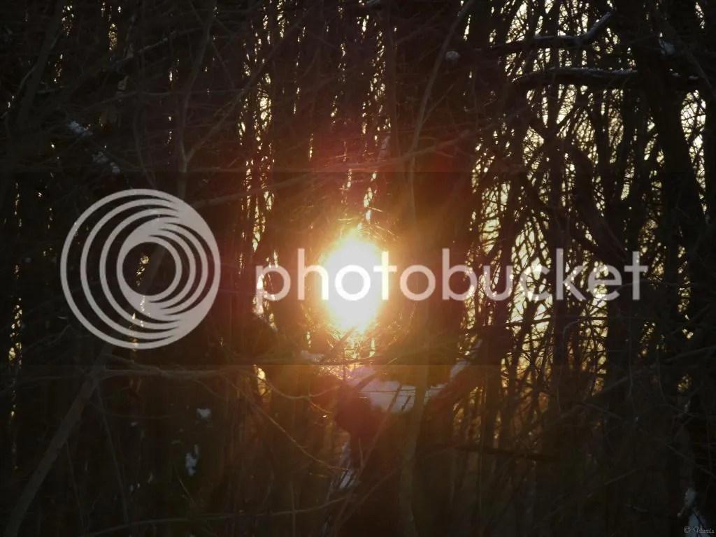 Photo P2880420.jpg