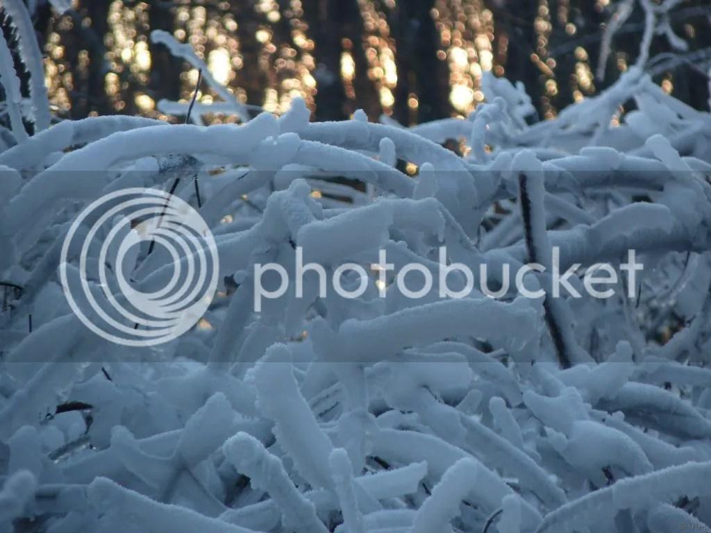 Photo P2880462.jpg